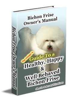 The Amazing Bichon Frise Dog - Everything You Must Know!